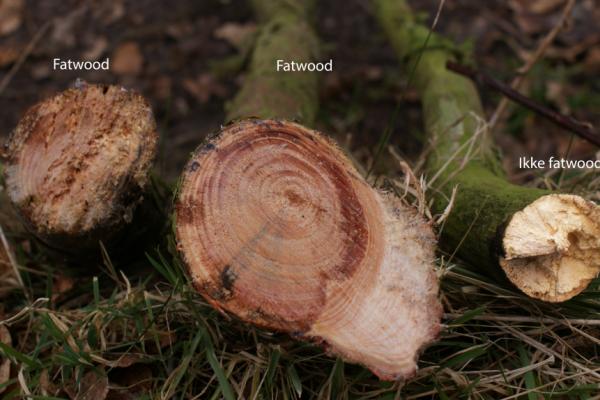 Fatwood i Danmark